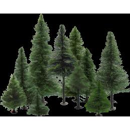 K/087 - Drzewa iglaste...